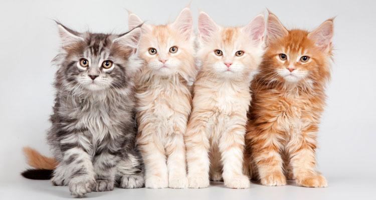 beneficio de las mascotas para los niños