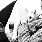 Gatitos con garantías, la historia de Happy