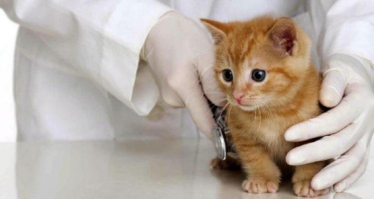 gatitos con garantías