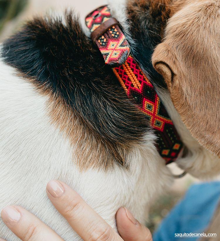 collares para perros originales