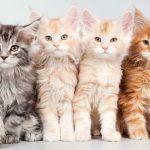Mascotas y niños, ¿cómo hacer que funcione?