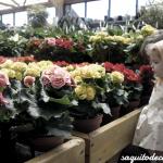 Comprando flores con Omini