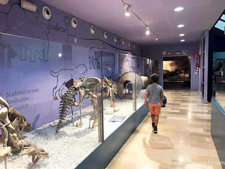 museo de ciencias naturales valencia